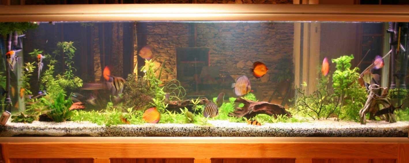 aquarium maintenance toronto freshwater tank