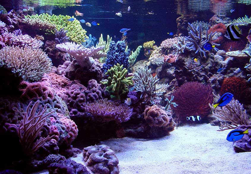 aquarium maintenance toronto reef tank