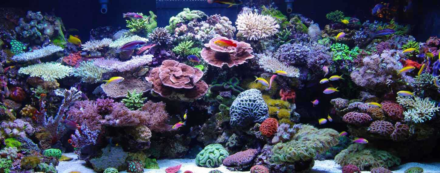 aquarium maintenance toronto reeftank