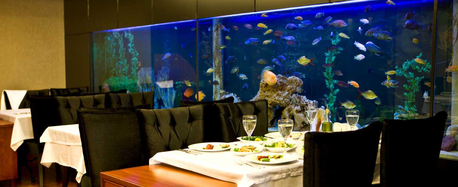 aquarium maintenance toronto restaurant cichlids tank