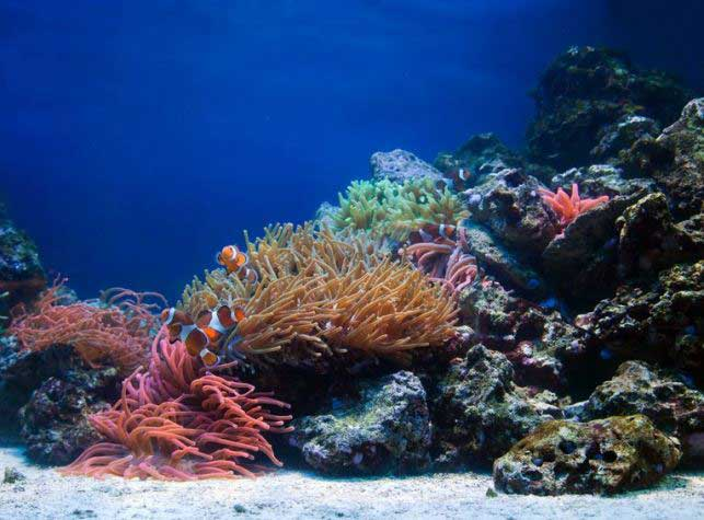 toronto aquarium aquascape reeftank
